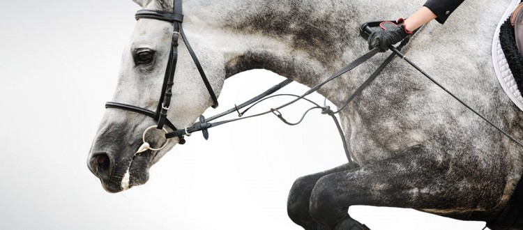 image article Salon du cheval de Paris 2016